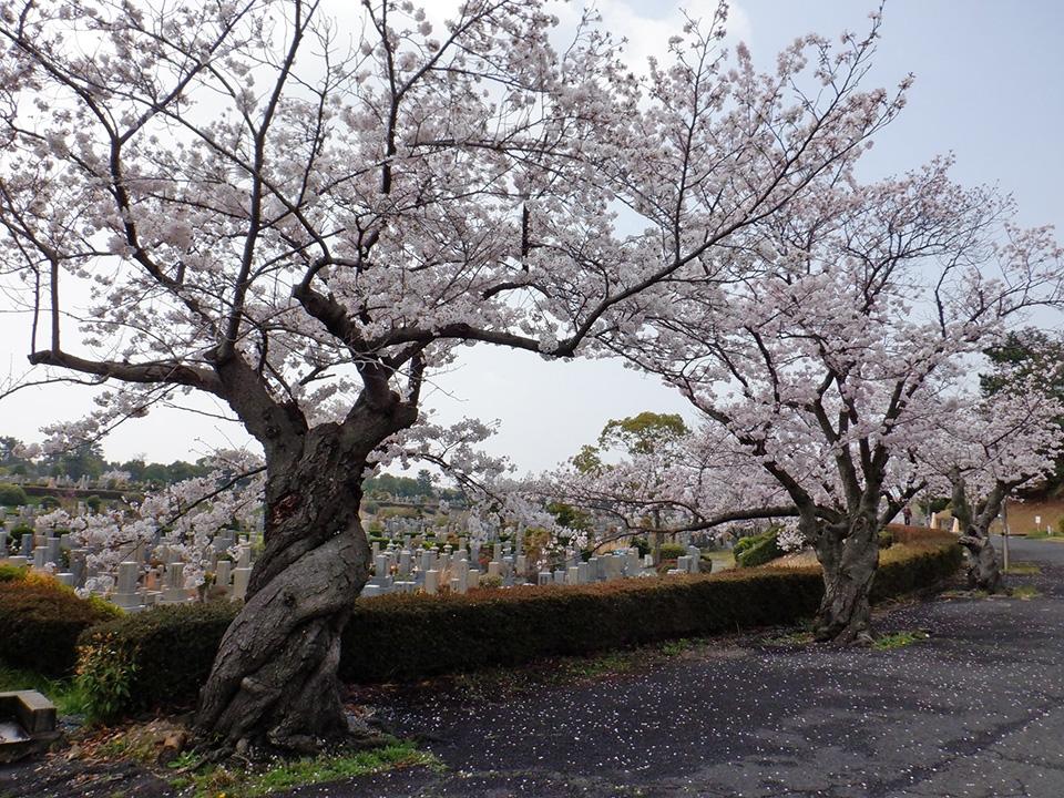 大阪市設 服部霊園の画像2