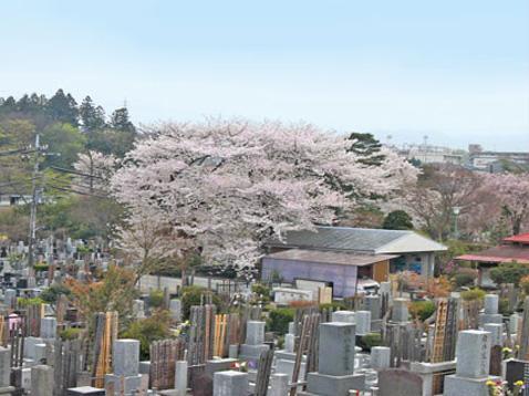 八王子市営 緑町霊園の画像2