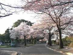 川崎市営 緑ヶ丘霊園の画像