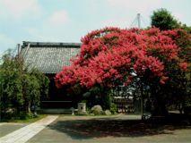 法華山 本興寺の画像