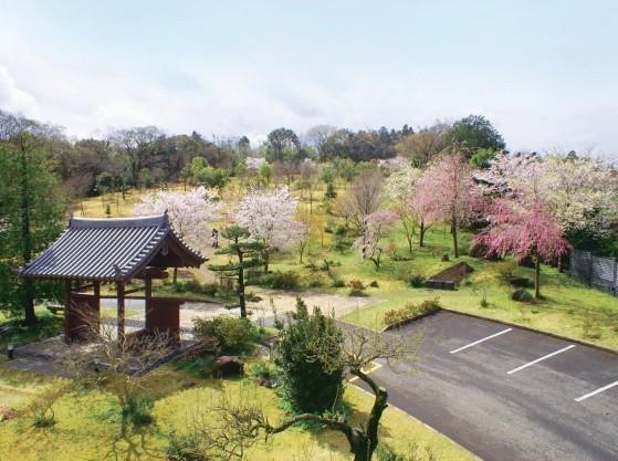 真光寺 里山の樹木葬|写真中央の丘陵部の全てが樹木葬墓地です。