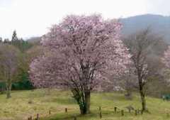 樹木葬の天徳寺