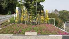 田上共同墓地管理組合・樹木葬