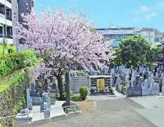 高輪正源寺 永代供養墓
