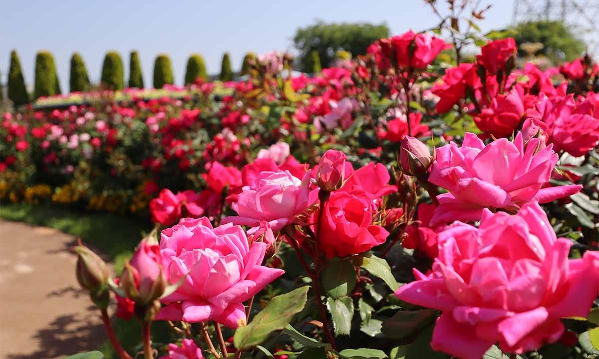サニープレイス松戸 樹木葬・納骨堂|◆地域初! 新区画誕生◆ 様々な家族のかたちに対応できる家族墓所エリアで、ペットも一緒に眠れます。