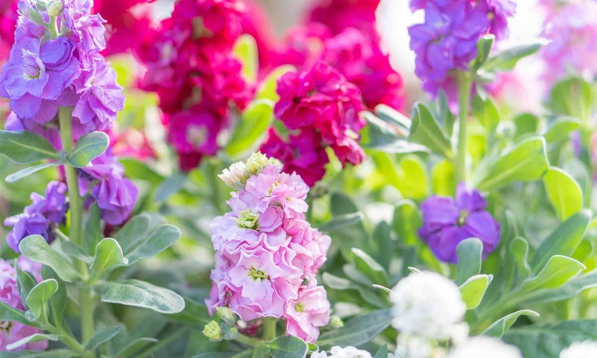サニープレイス松戸 樹木葬・永代供養墓