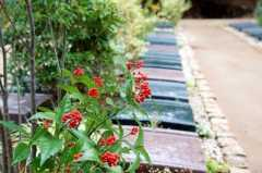 松戸庭苑の画像