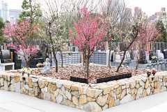 梅窓院 永代供養墓・樹木葬の画像