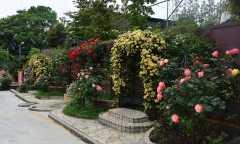美園桜ヶ丘 無量寺霊園の画像