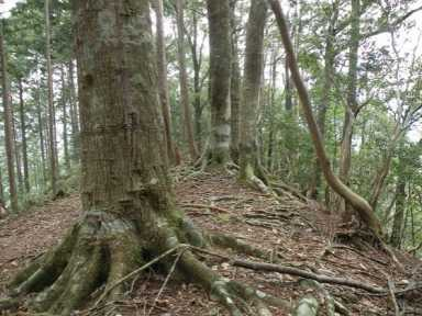 森のお墓「いのちの森」
