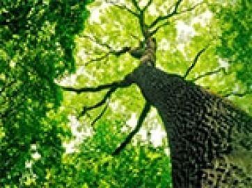 自然に還る樹木葬特集