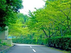 園へと続く道