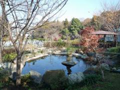 日本庭園内の池。色とりどりの鯉が泳いでいる。