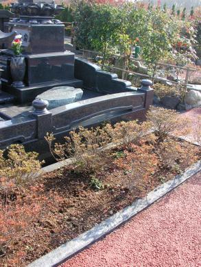 お墓の横のサツキ