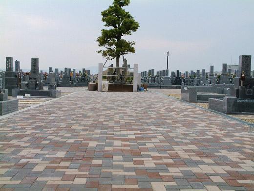 墓園の中央のクスノキ