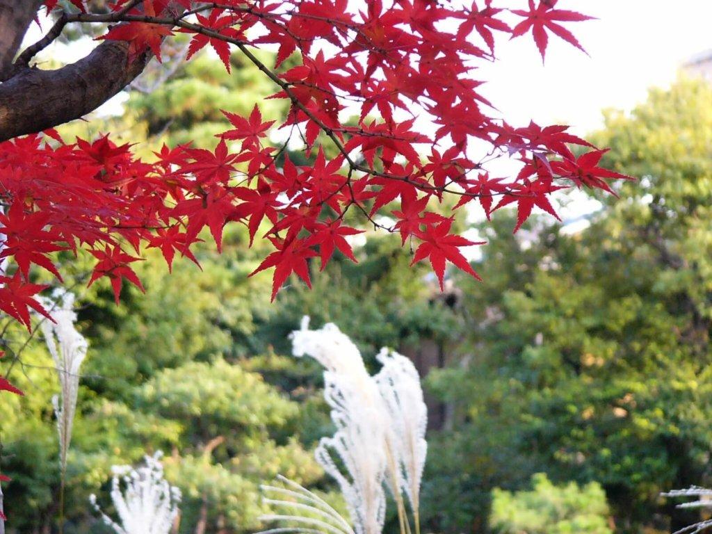 渉成園の紅葉とすすき