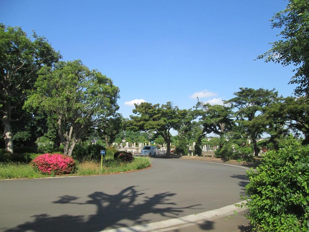都立多磨霊園内の車道の様子