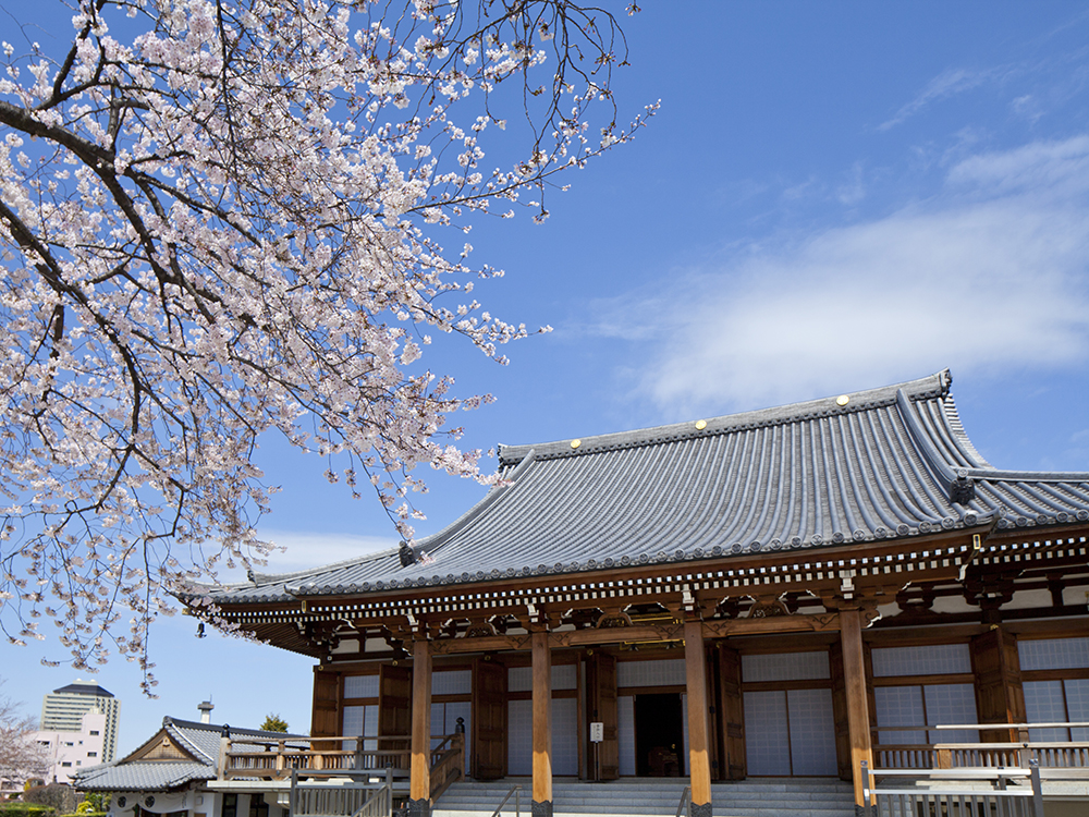 小石川伝通院の本堂には阿弥陀如来が祀られている