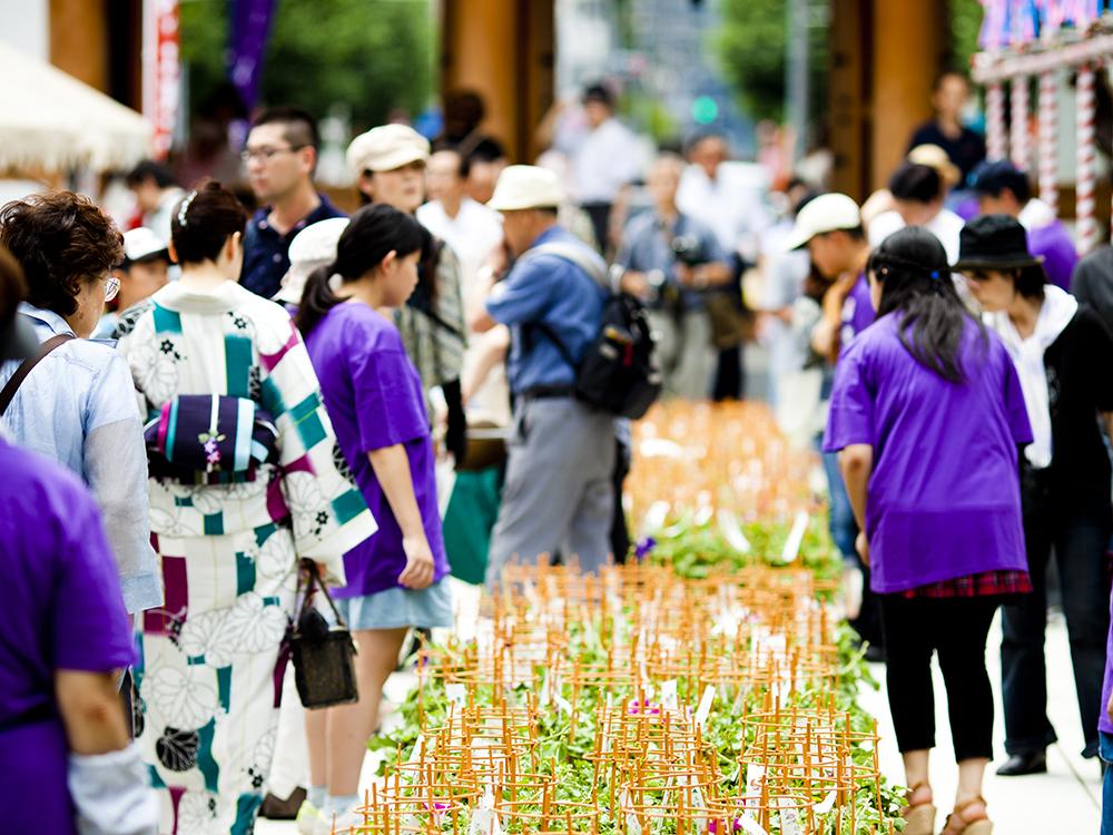 伝通院の境内は文京区の夏の風物詩・朝顔・ほおずき市の会場になる